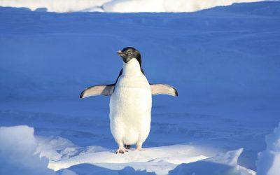 Google Penguin Changes SEO – Again