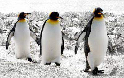 Did Penguin 3.0 Crash Your Rankings?